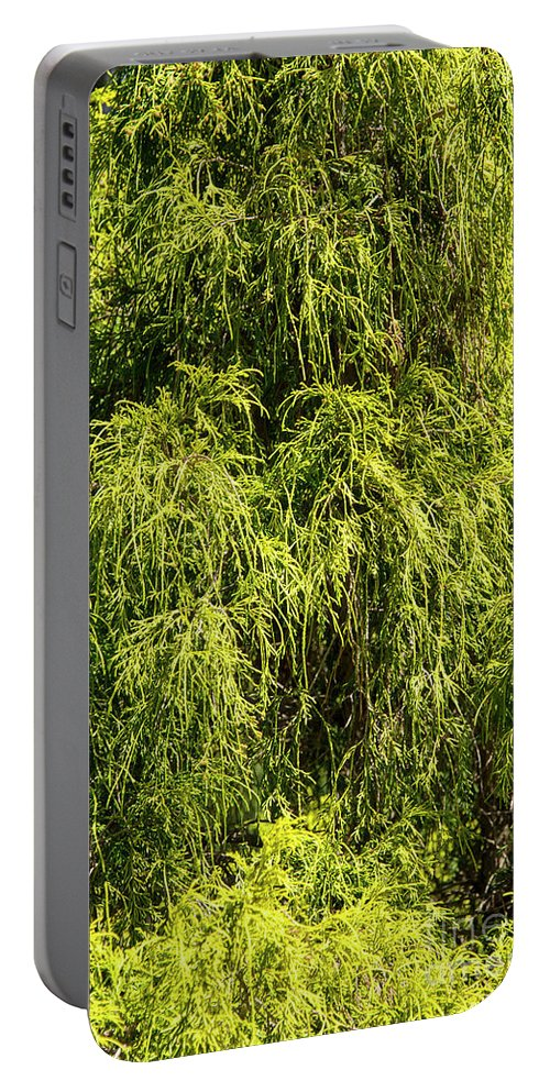 Hagerstown Maryland Tree Trees Nature City Park Parks Green Greens Portable Battery Charger featuring the photograph Spring Greens by Bob Phillips