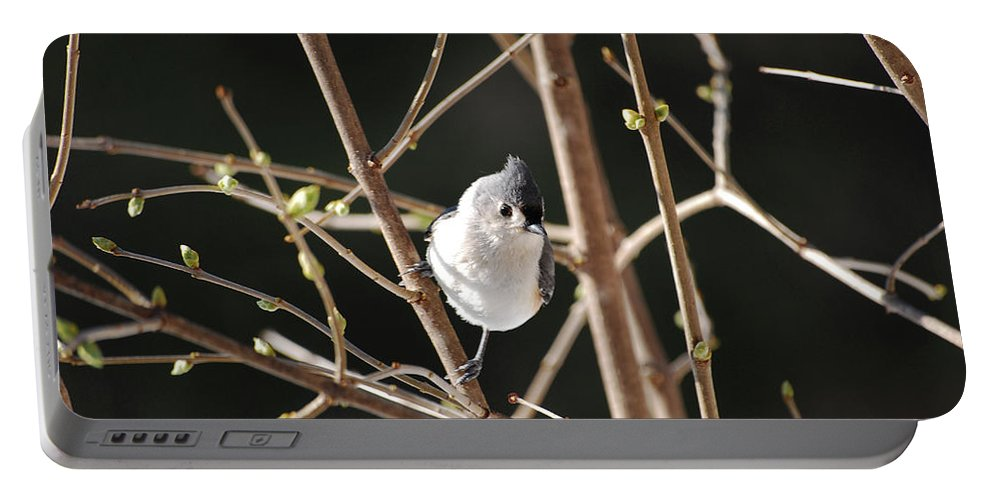 Titmouse Portable Battery Charger featuring the photograph Spring Is On The Way by Lori Tambakis