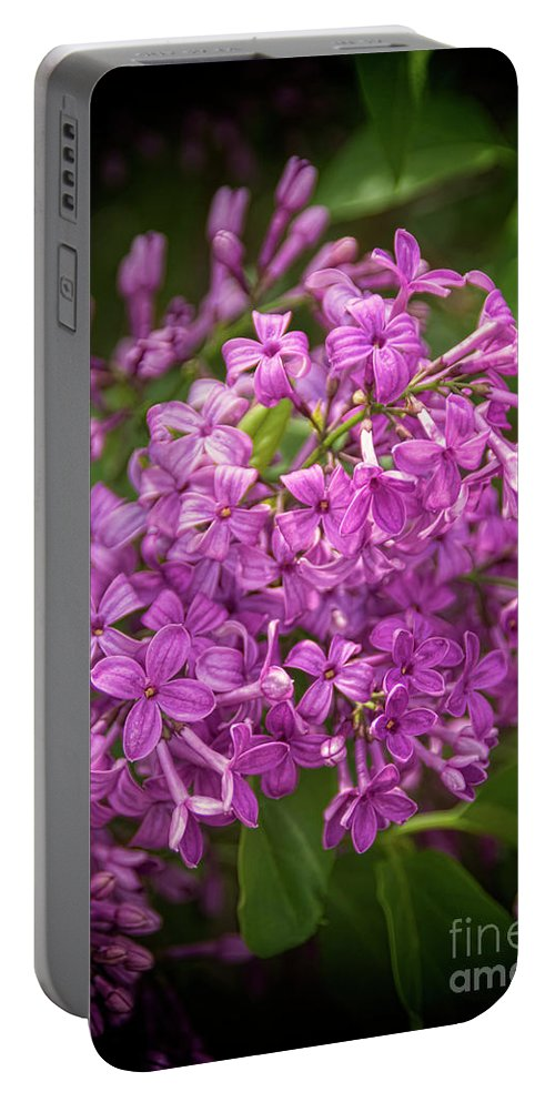 Lilac Portable Battery Charger featuring the photograph Spring Lilacs On Black by Janice Pariza