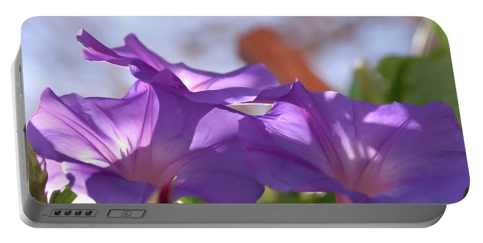 Morning Glory Portable Battery Charger featuring the photograph Spring Morning by Donna Blackhall