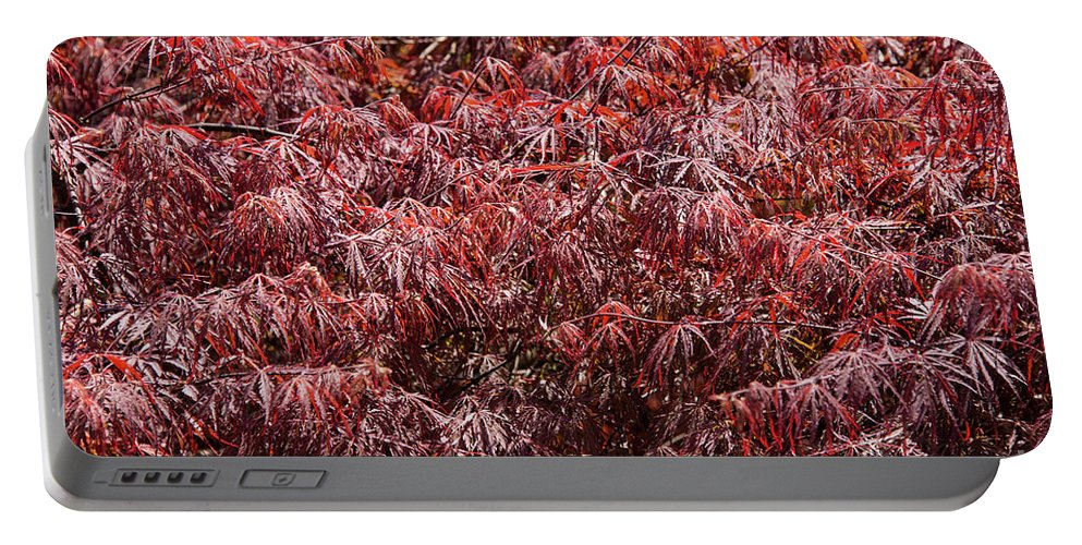 Hagerstown Maryland Tree Trees Nature City Park Parks Leaf Leaves Red Reds Portable Battery Charger featuring the photograph Spring Reds by Bob Phillips