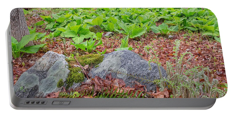 Forest Portable Battery Charger featuring the photograph Spring Renewal by Bill Wakeley