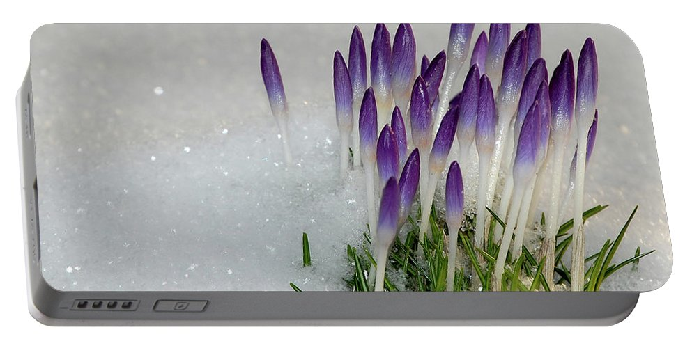 Spring Portable Battery Charger featuring the photograph Spring Snow by Lisa Kane