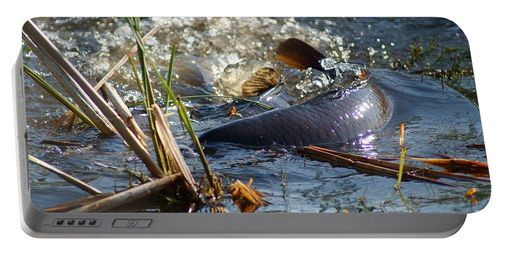 Carp Fish Spawning Portable Battery Charger featuring the photograph Spring Spawn by Joanne Smoley