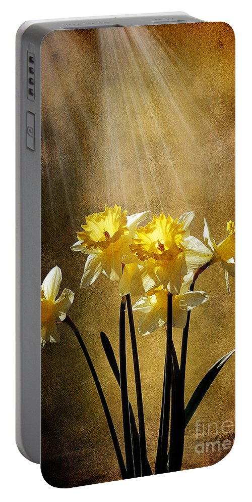 Daffodils Portable Battery Charger featuring the photograph Spring Sun by Lois Bryan