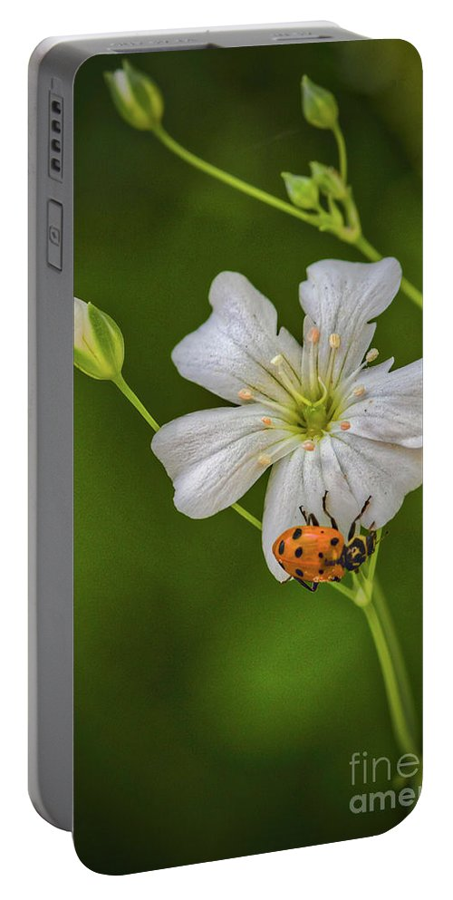 Springtime Ladybug Portable Battery Charger featuring the photograph Springtime Ladybug by Mitch Shindelbower
