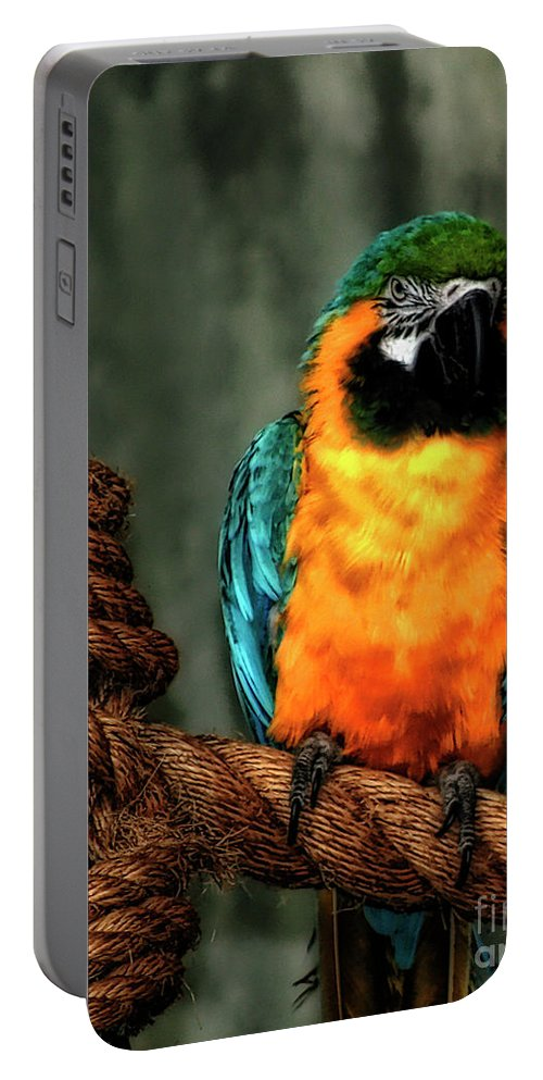 Animal Portable Battery Charger featuring the photograph Squawk by Joel Witmeyer