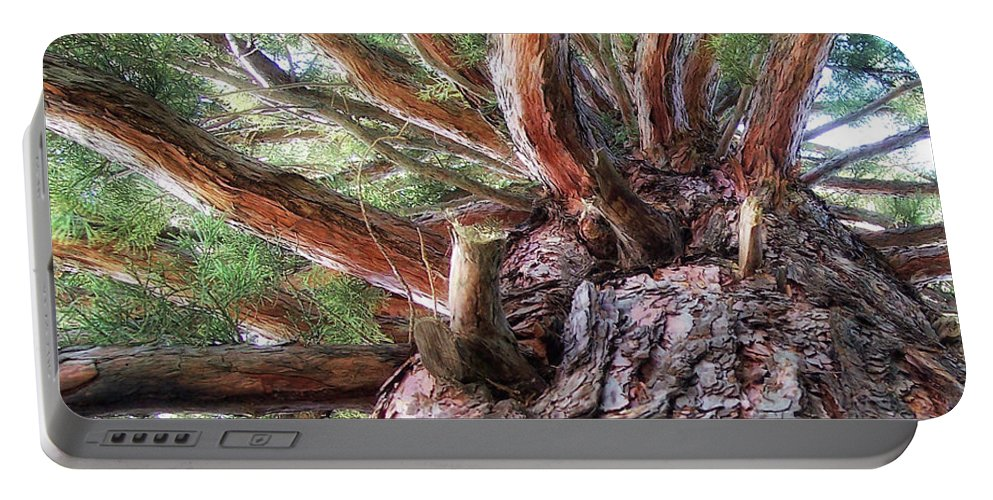 Tree Portable Battery Charger featuring the photograph Squirrel Haven by Donna Blackhall