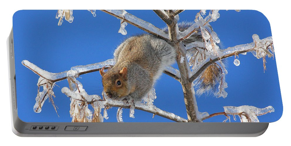 Squirrel Portable Battery Charger featuring the photograph Squirrel On Icy Branches by Doris Potter