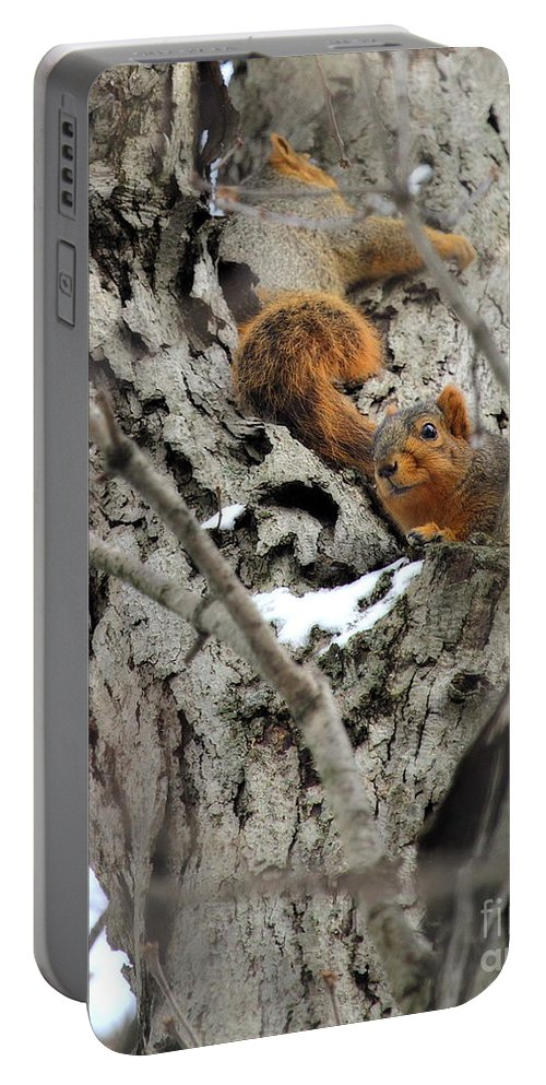 One Gray Squirrel Portable Battery Charger featuring the photograph Squirrels At Play by Angela Rath