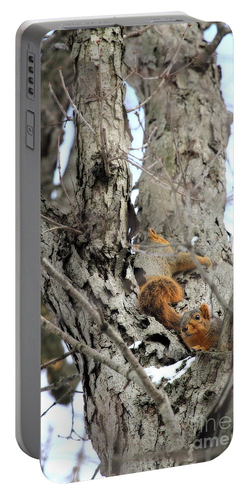 One Gray Squirrel Portable Battery Charger featuring the photograph Squirrels At Play Vertically by Angela Rath