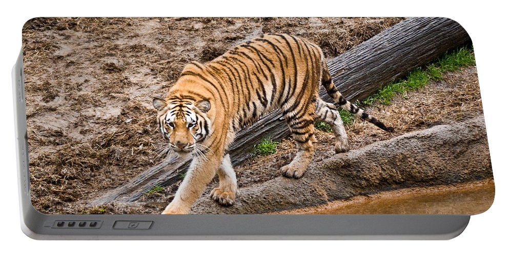 Tiger Portable Battery Charger featuring the photograph Stalking Tiger - Bengal by Douglas Barnett