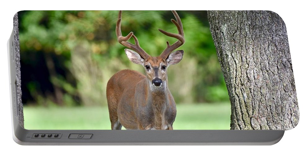 Wilderness Portable Battery Charger featuring the photograph Stand Your Ground by Jeramey Lende