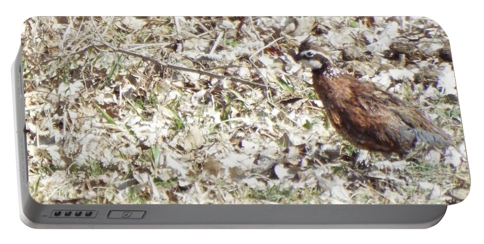 Horse Portable Battery Charger featuring the photograph Standing Still by Caryl J Bohn