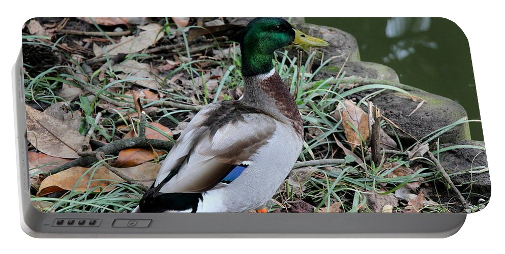 Sarah Duke Portable Battery Charger featuring the photograph Mallard On Watch by Rand Wall
