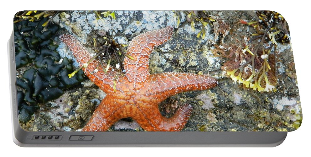 Starfish Portable Battery Charger featuring the photograph Starfish Running by Gallery Of Hope