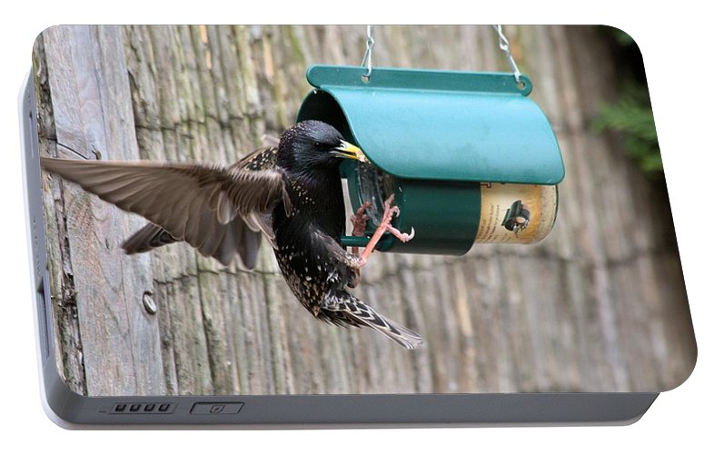 Starling On Bird Feeder Portable Battery Charger featuring the photograph Starling On Bird Feeder by Gordon Auld