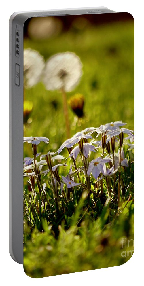 Star Flower Portable Battery Charger featuring the photograph Stars And Dandelions by Rachel Morrison