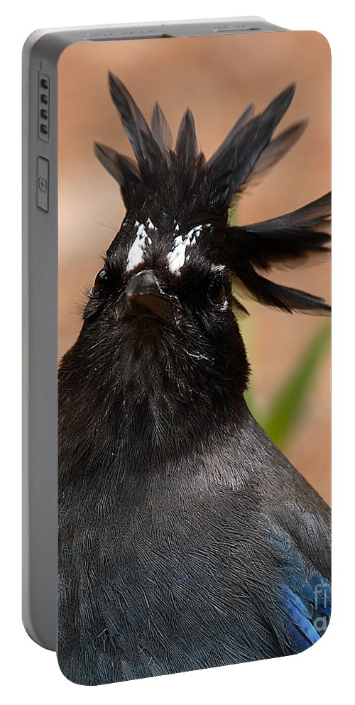 Jay Portable Battery Charger featuring the photograph Stellar's Jay With Rock Star Hair by Max Allen