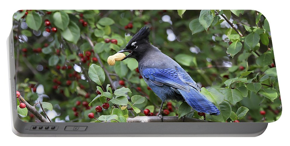 Bird Portable Battery Charger featuring the photograph Steller's Jay by Teresa Zieba