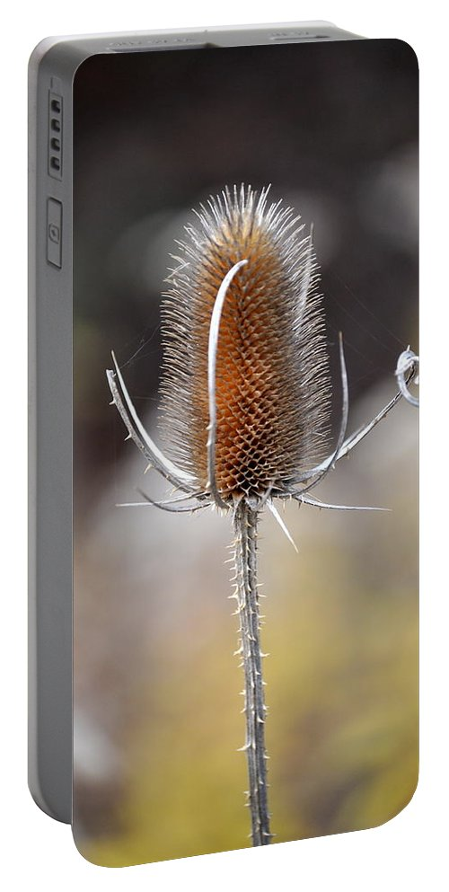 Flower Portable Battery Charger featuring the photograph Sticky Situation by Trish Tritz
