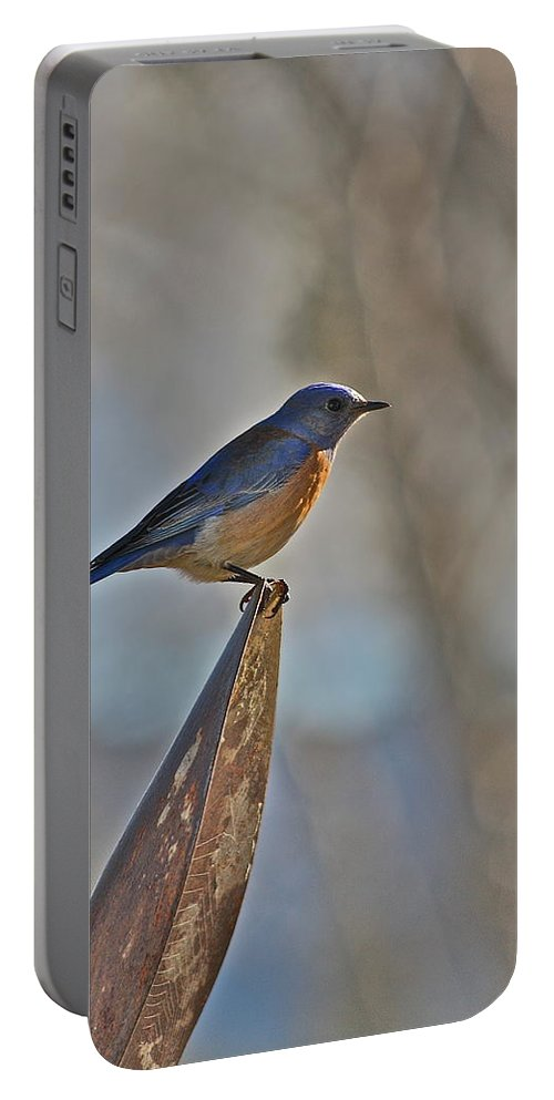 Bird Portable Battery Charger featuring the photograph Stopping On A Shovel by Diana Hatcher