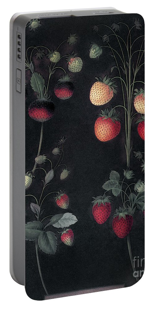 1812 Portable Battery Charger featuring the photograph Strawberries by Granger