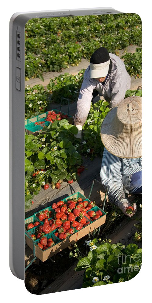 Strawberry Portable Battery Charger featuring the photograph Strawberry Harvest by Inga Spence