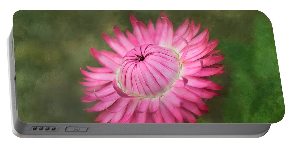 Flower Portable Battery Charger featuring the photograph Strawflower by Kim Hojnacki