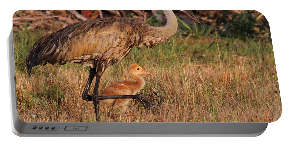 Sandhill Crane Portable Battery Charger featuring the photograph Strolling Sandhill Crane Family by Meg Rousher