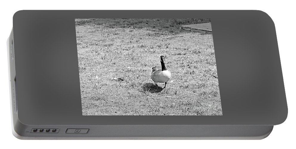 Gander Portable Battery Charger featuring the photograph Strutting His Stuff Black And White by Mary Ann Weger