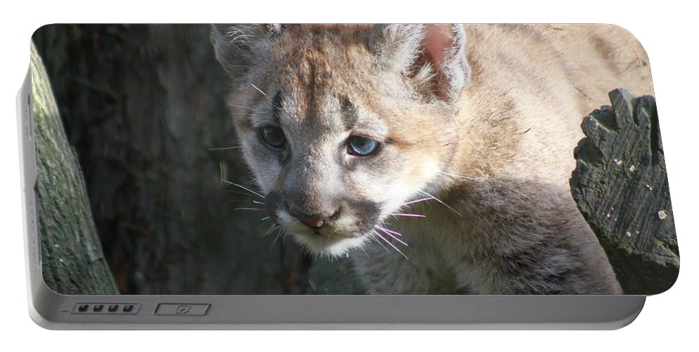 Cougar Portable Battery Charger featuring the photograph Studying The Ways by Laddie Halupa