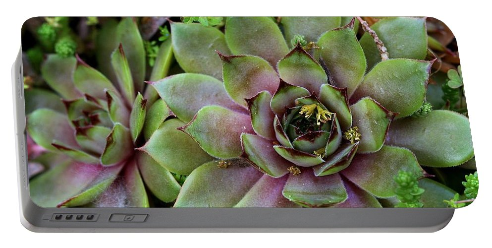 Nature Portable Battery Charger featuring the photograph Succulent 3 by Kristina Jones