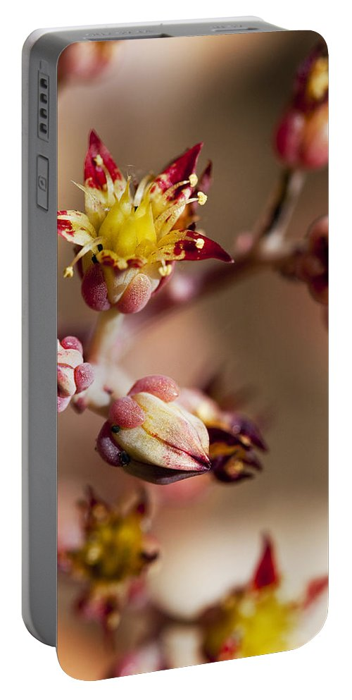 Cactus Portable Battery Charger featuring the photograph Succulent Flowers by Kelley King