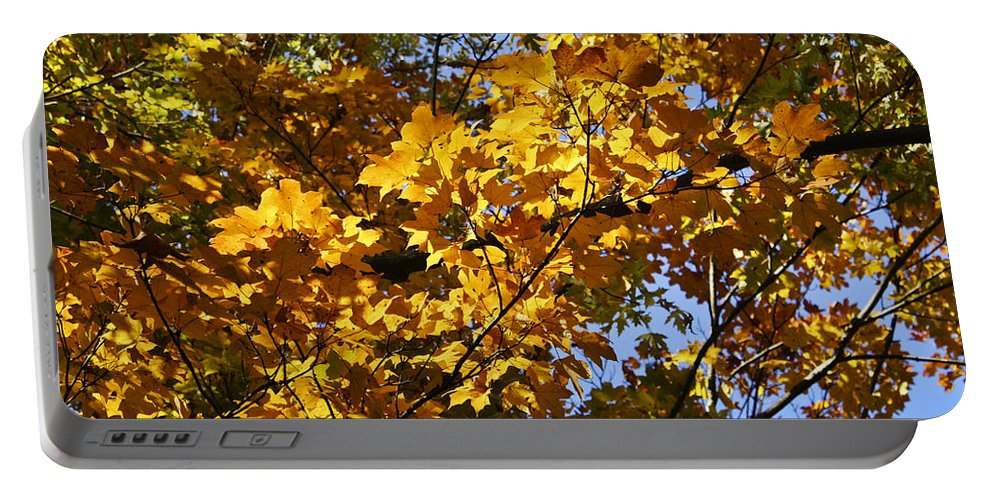 Sugar Portable Battery Charger featuring the photograph Sugar Maple by Teresa Mucha