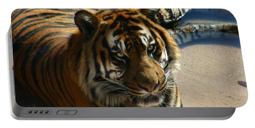 Tiger Portable Battery Charger featuring the photograph Sumatran Tiger by Anthony Jones