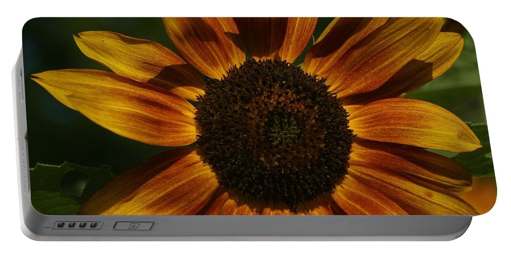 Flower Portable Battery Charger featuring the photograph Sun Flower by Eric Noa