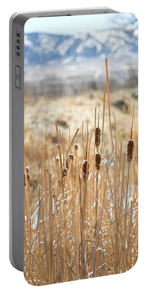 Cattails Portable Battery Charger featuring the photograph Sun Kissed Cattails - Casper Wyoming by Diane Mintle