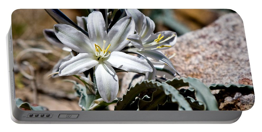 Desert Lily Portable Battery Charger featuring the photograph Sun Soaked Desert Lily by Chris Brannen