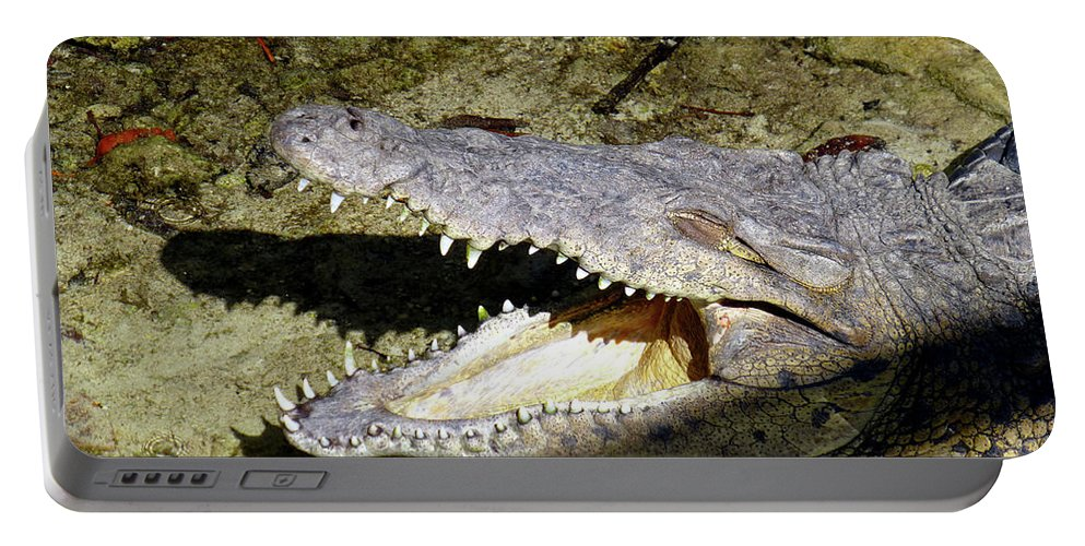 Crocodile Portable Battery Charger featuring the photograph Sunbathing Croc by Francesca Mackenney