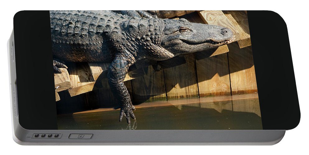 Alligator Portable Battery Charger featuring the photograph Sunbathing Gator by Carolyn Marshall