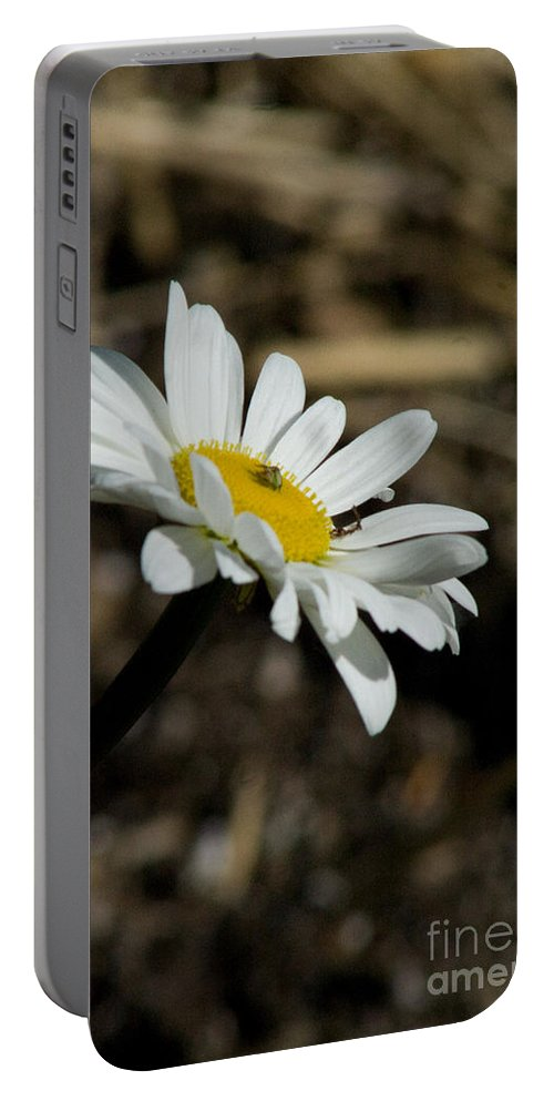 Flower Portable Battery Charger featuring the photograph Sunbathing On A Daisy by Martha Johnson