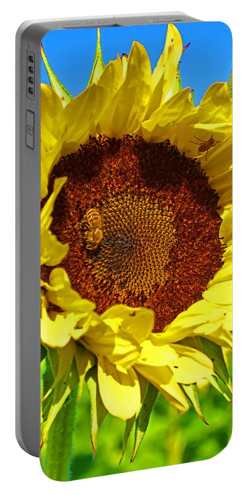 Pastoral Portable Battery Charger featuring the photograph Sunflower And Bee by Heather Coen