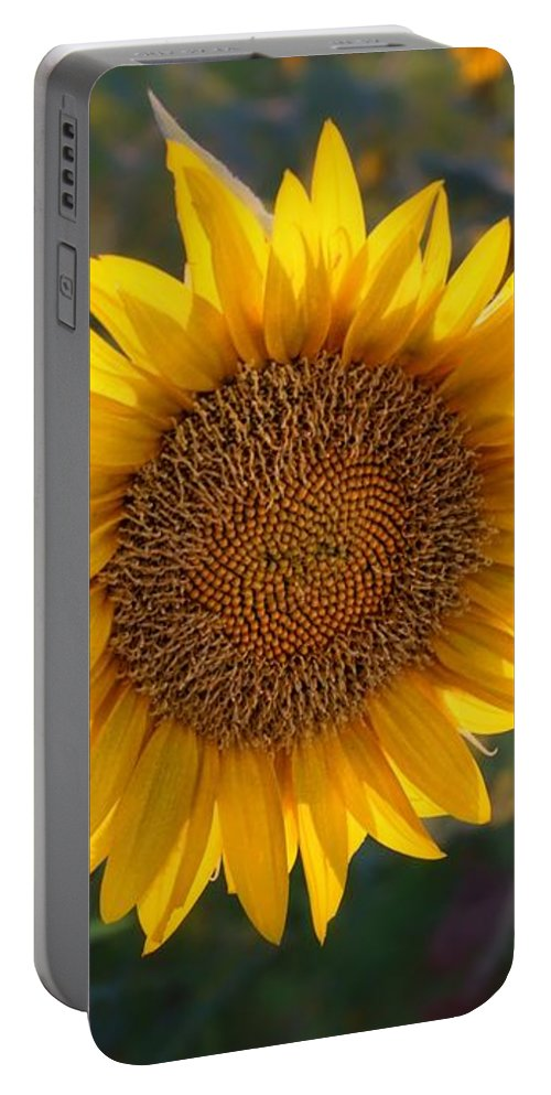 Sunflower Portable Battery Charger featuring the photograph Sunflower - Facing East by Nikolyn McDonald