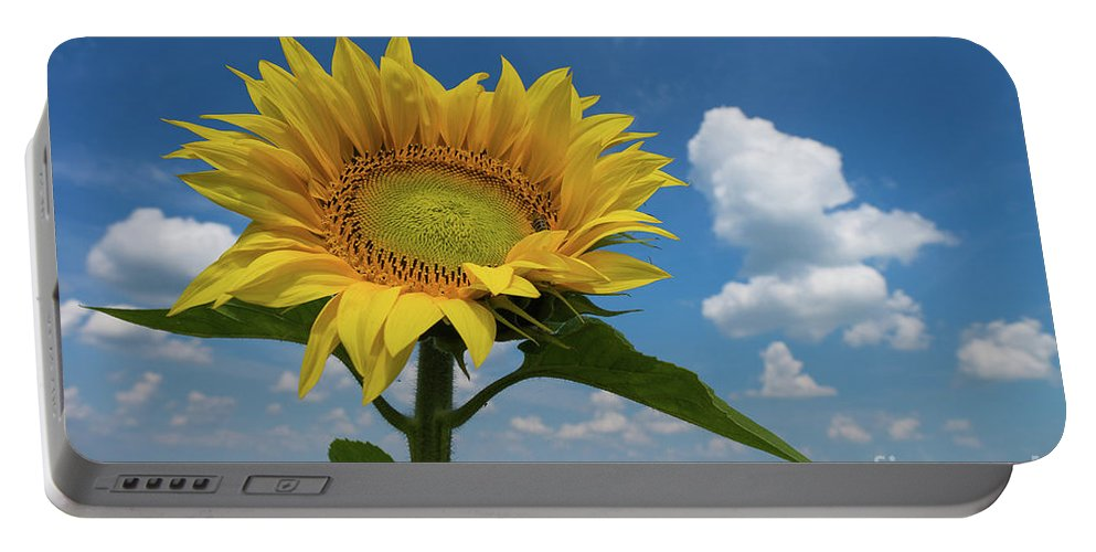 Sunflower Portable Battery Charger featuring the photograph Sunflower by Oxana Gracheva