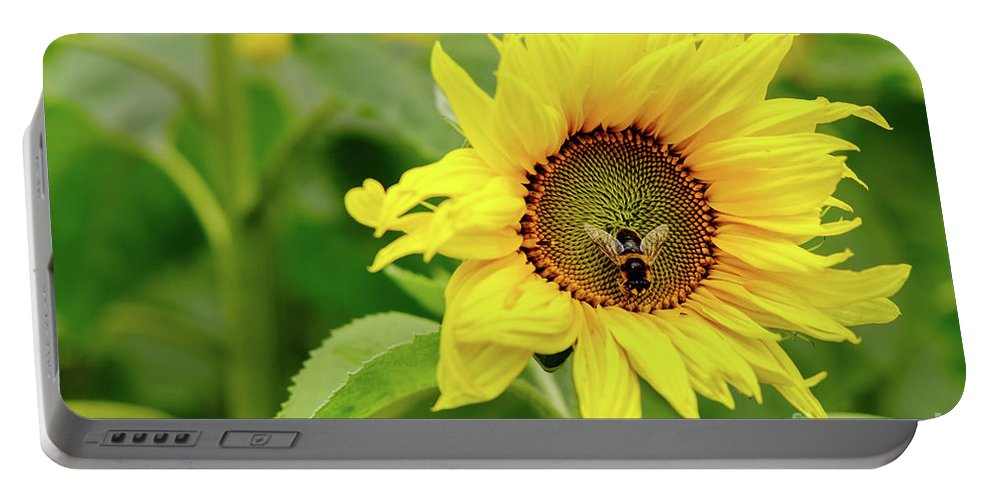 Sunflower Portable Battery Charger featuring the photograph Sunflower by Shaun Turner