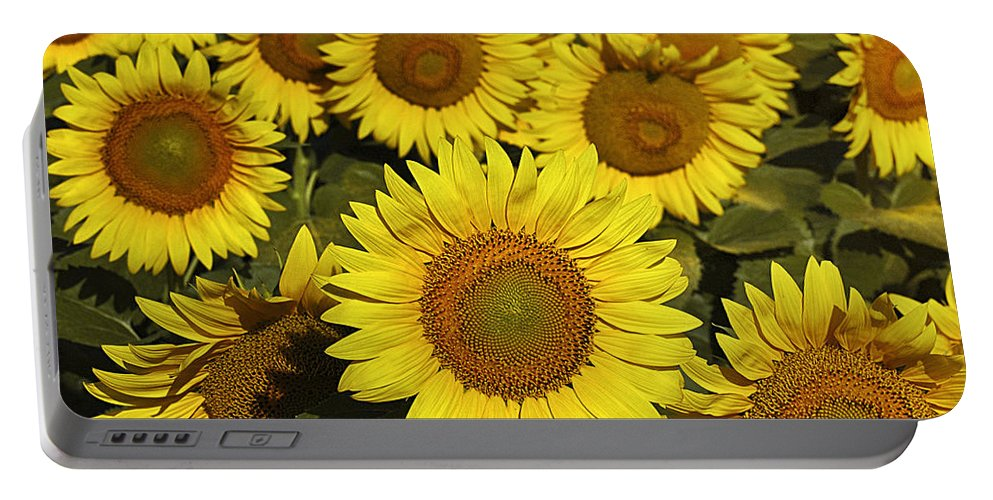 Flowers Portable Battery Charger featuring the photograph Sunflower Sunshine by Timothy Flanigan