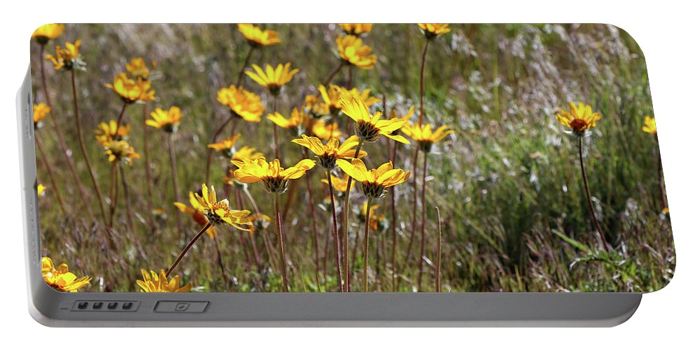 Sunflowers Portable Battery Charger featuring the photograph Sunflowers by Rosalyn Zacha