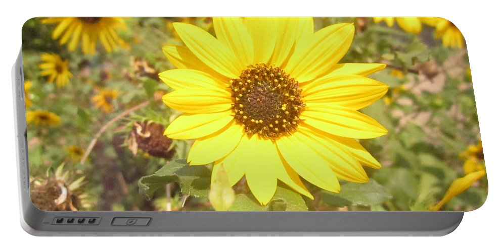 Sunflower Portable Battery Charger featuring the photograph Sunflowers by Utpal Datta