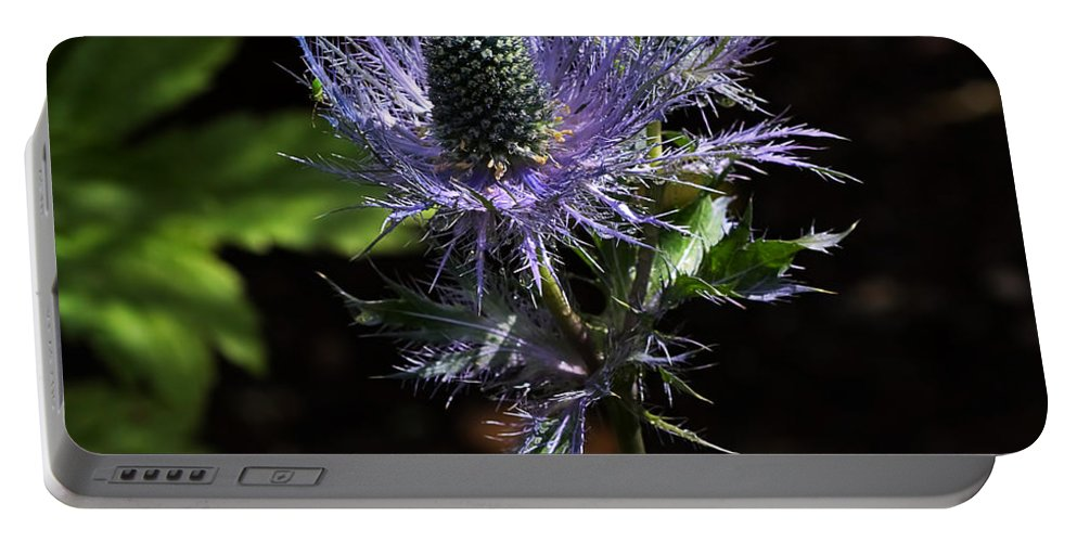 Flower Portable Battery Charger featuring the photograph Sunlit Bloom Of Alpine Sea Holly by Louise Heusinkveld